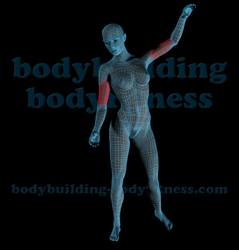 Bodybuilding bodyfitness : Anatomy and Exercises